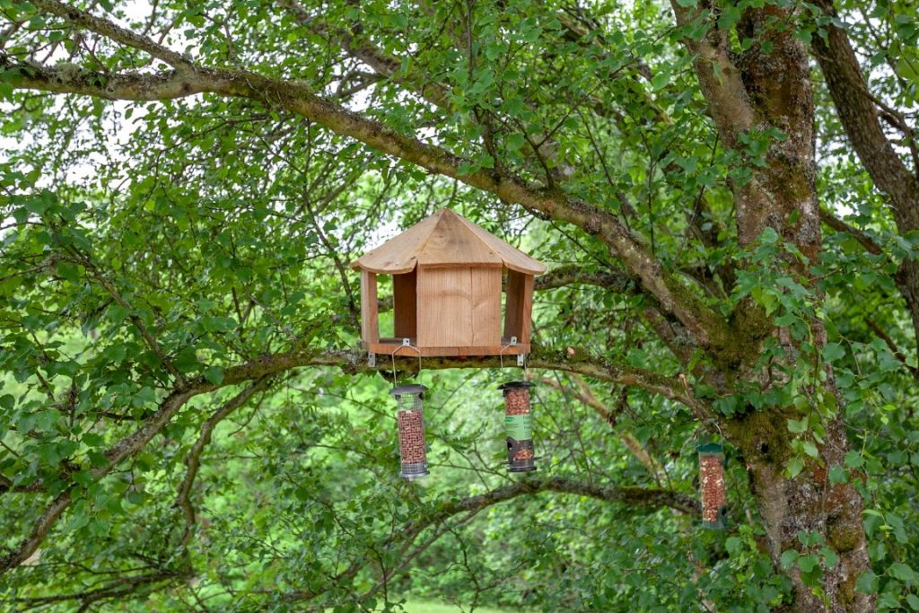 Bird Feeder View